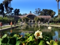 Balboa Park Reflecting Pool with Water Lillies